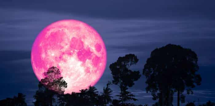 Pink moon with silhouette of a tree on night sky / Shutterstock