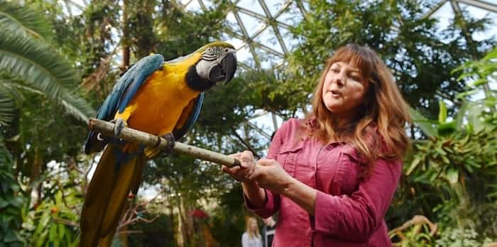 Manager Agnes Romses and Art, a blue and gold macaw, have much to squawk about as the Bloedel Conservatory turns half a century. Photo Dan Toulgoet