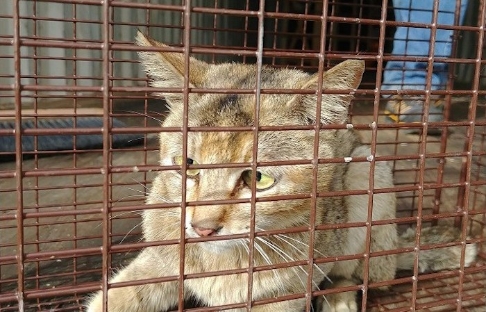 A cat has arrived at the North Cariboo District SPCA after being stuck in a shipping container for more than three weeks without water and food. (via North Cariboo District SPCA)
