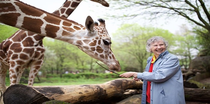 Anne Innis Dagg with a giraffe at Brookfield Zoo, Chicago. The trailblazing Canadian giraffologist is featured in the documentary The Woman Who Loves Giraffes, screening for Last Mondays at the Movies on April 29.Photograph By Elaisa Vargas, contributed