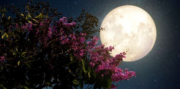 Full moon and flowers / Shutterstock