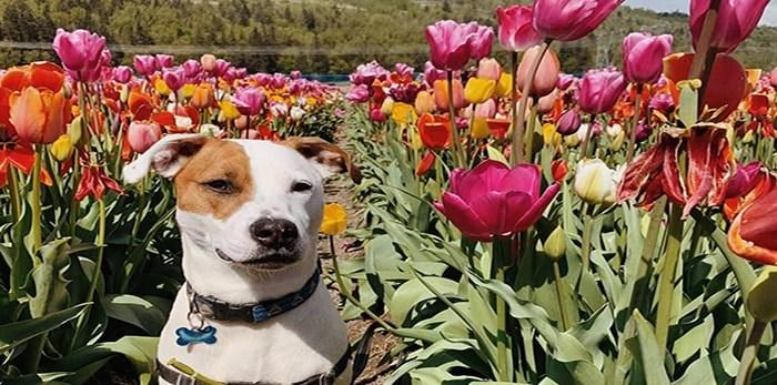 Daisy Mae enjoying the flowers.