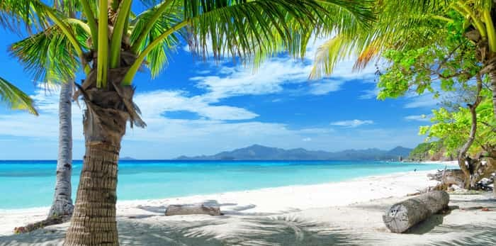 Green tree on a white sand beach in Philippines / Shutterstock