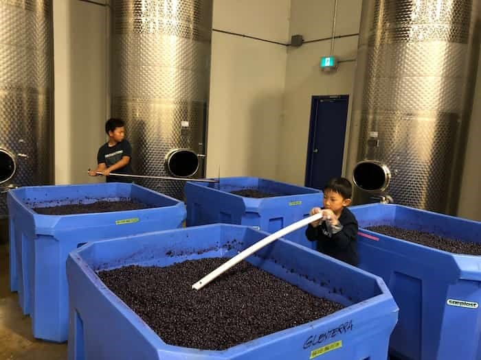 Richmond-based Fraser Sun Winery is a family-run business and owner Frank Shang says his sons have already started to learn some tricks of the winery trade. Photo: Submitted by Shang