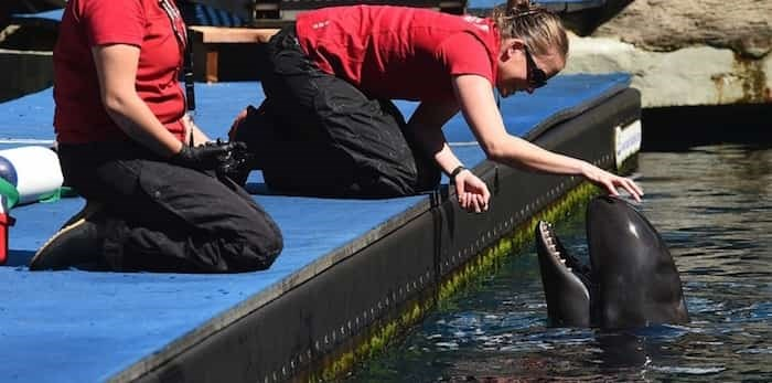 Vancouver Aquarium this week launched a civil suit against the City of Vancouver and Vancouver Park Board claiming the 2017 bylaw banning cetaceans was a breach of contract that has resulted in millions in financial losses. File photo Dan Toulgoet