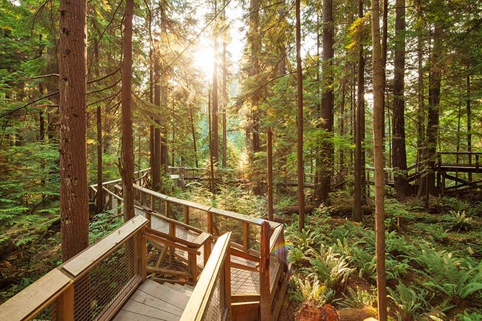 Nature's Edge Boardwalk at Capilano Suspension Bridge Park, Photo: Capilano Suspension Bridge