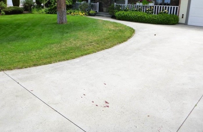 Blood from a wounded deer on a Kelowna driveway. Photo contributed.