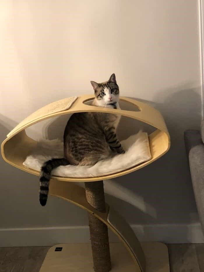 The Fur-Bearers has renewed its calls for the City of Delta to take action after a family cat by the name of Blu was grievously injured in a foot-hold trap in Ladner. Photograph: Josie Moubert