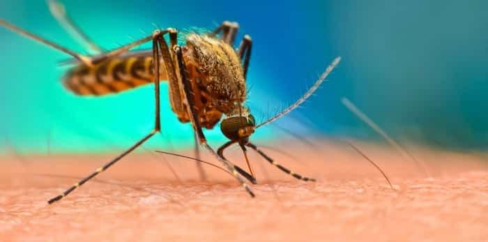 Photo: Mosquitoes / Shutterstock
