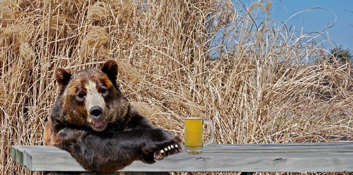 Bear at picnic table/Shutterstock