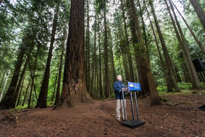 Doug Donaldson, minister of forests, lands, natural resource operations and rural development, announces steps to protect some of the province's largest trees during a press conference in Francis/King Regional Park. July 17, 2019 Photo by Darren Stone/Times Colonist