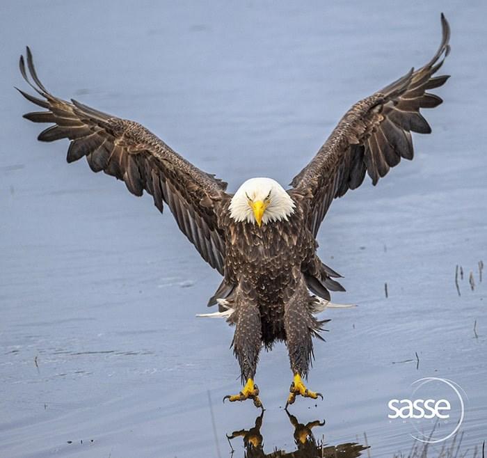 Christian Sasse's favourite eagle photo: