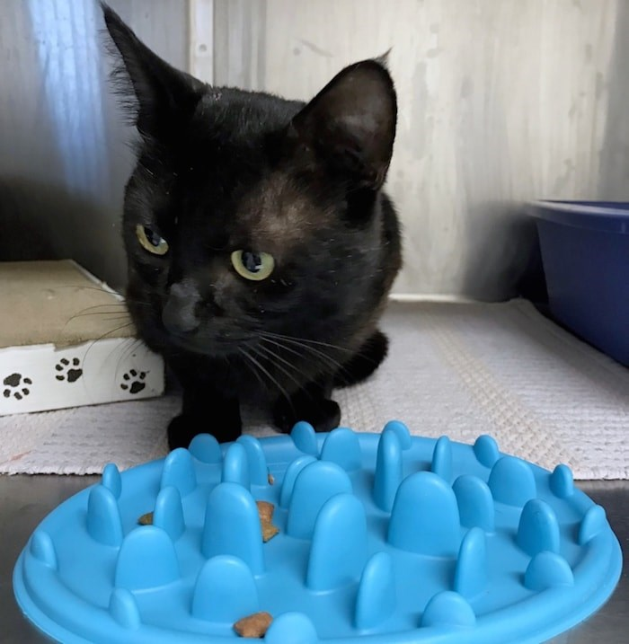 You can donate to the BC SPCA to help Mystic. Photo courtesy BC SPCA