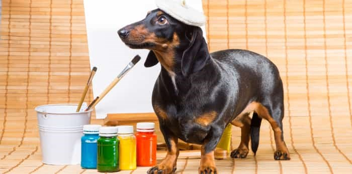 Photo: Dog painting in a beret / Shutterstock