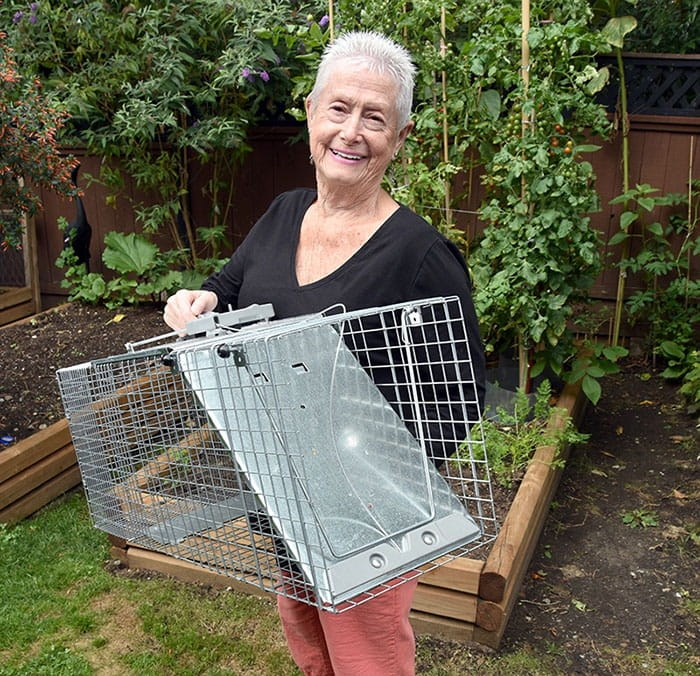 Midge Tack has been provided with a humane trap to help cage an injured raccoon that has been frequenting her Port Coquitlam property. Photo Gary Mc Kenna