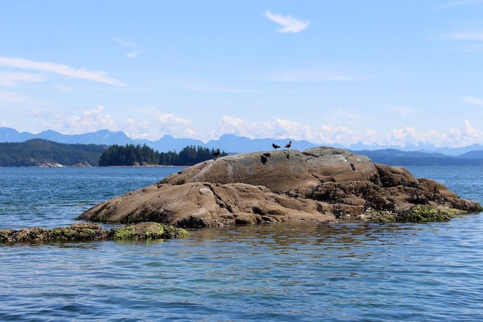 Catching a glimpse at local birdlife while out on a boat off Quadra Island. Photo by Lindsay William-Ross/Vancouver Is Awesome