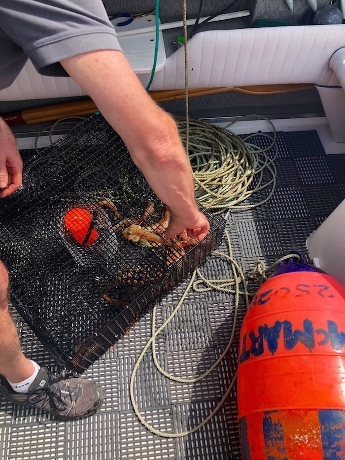 Retrieving what was in our prawn traps set the day before. This modest catch became a dinner feast cooked up back at our suite. Photo by Lindsay William-Ross/Vancouver Is Awesome