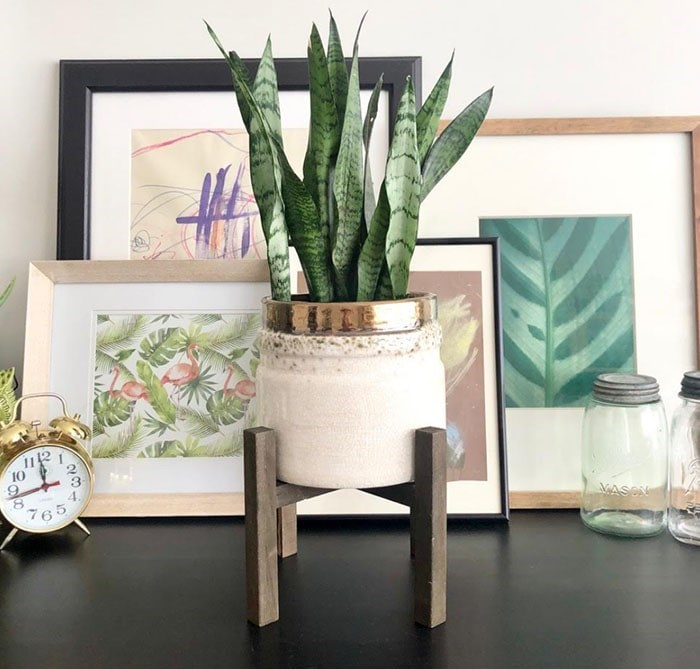 """The """"Unkillable"""" Snake Plant; This is Cali the Snake Plant with Pauly the Plant Stand. Photo: Sarah Shore"""