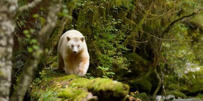 Photo: Spirt Bear / Shutterstock