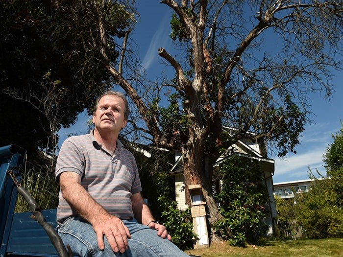 Marcus Kennedy says the 100-year-old arbutus tree in the front yard of his Kitsilano home is worth saving. Photo Dan Toulgoet