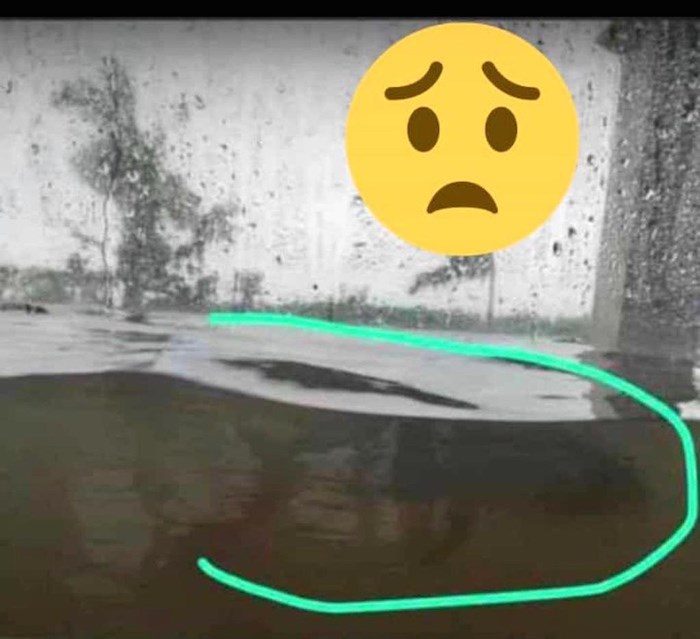 One of Blake Marshall's friends sent him this photo of a fish swimming by their main floor window in the Bahamas in the wake of Hurricane Dorian. Photo courtesy Blake Marshall