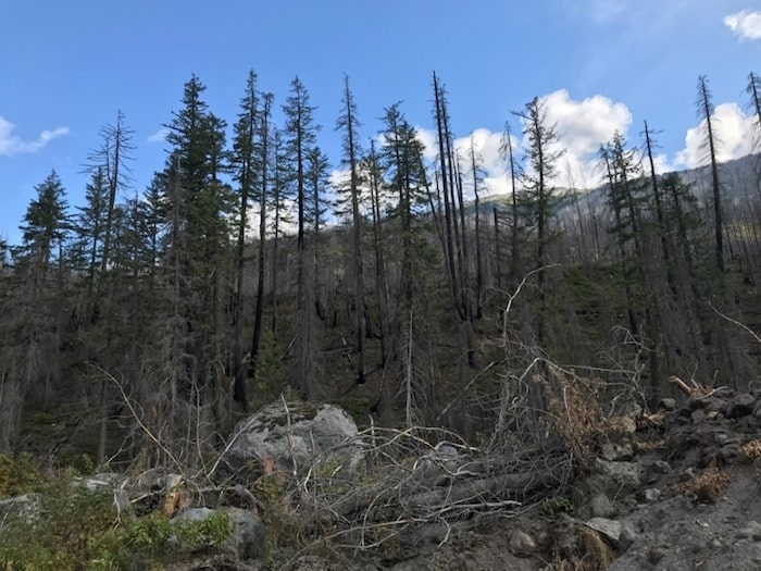 The scorched earth and trees left behind after the Mount Currie wildfire, which started off the fire season this spring. Photo by Jennifer Thuncher/The Squamish Chief