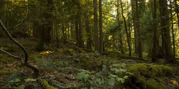 A wooded area on Newcastle Island, B.C./Shutterstock