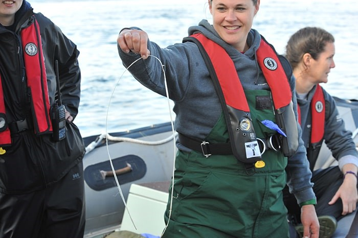 A rescue team member holds up the plastic band removed from the steller sea lion. Photo: Sea Doc Society