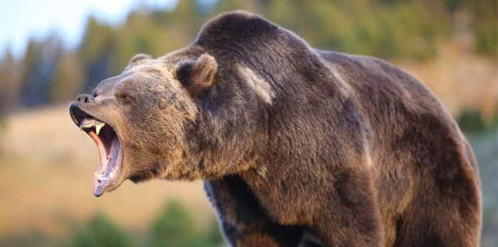 Photo: Grizzly / Shutterstock
