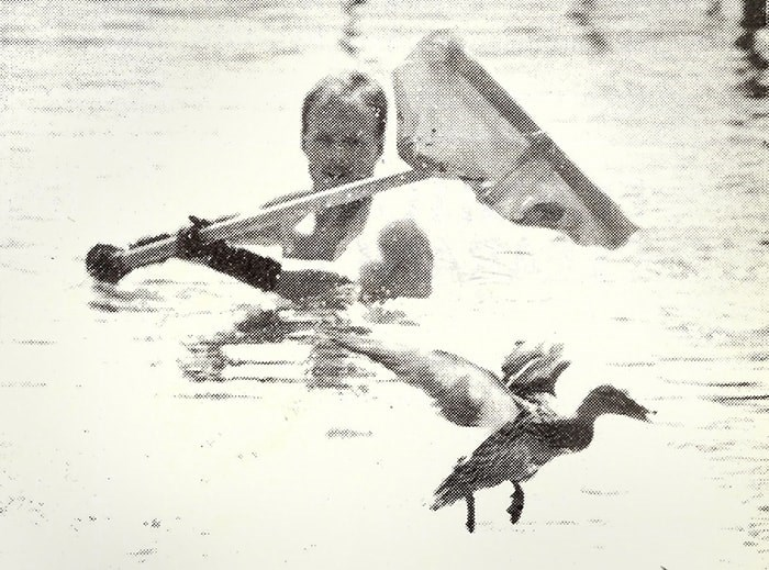 A mother duck eludes capture at McPherson Park Pool in 1993. - NOW archives