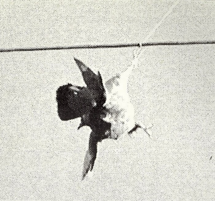 Things weren't looking so good for this pigeon caught on a BC Hydro powerline in March 2001, but staff at the Wildlife Rescue Association were hopeful it would recover after it was untangled. - NOW archives