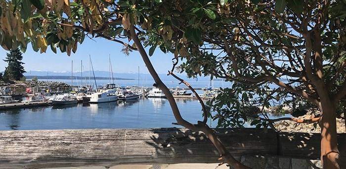 The harbour as seen from the shade of an arbutus tree at Lund Resort at Klah ah men. Photo Sandra Thomas