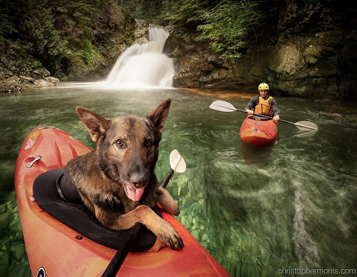 The 2020 Vancouver Police Dog calendar has been released. Photo: Christopher Morris