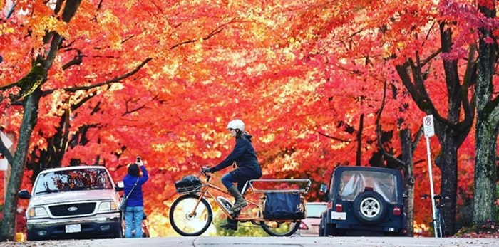 Cycling in autumn means the trail traffic is lighter and you can find some glorious surprises as the trees put on a colourful show. photo Dan Toulgoet/Vancouver Courier