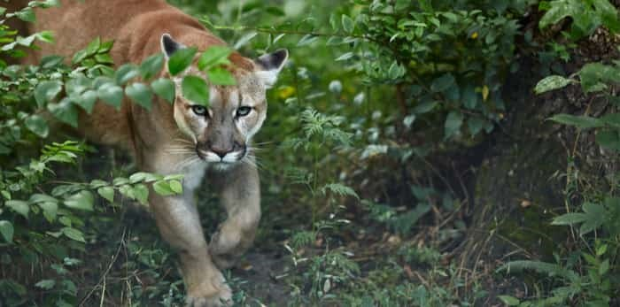 Photo: cougar / Shutterstock