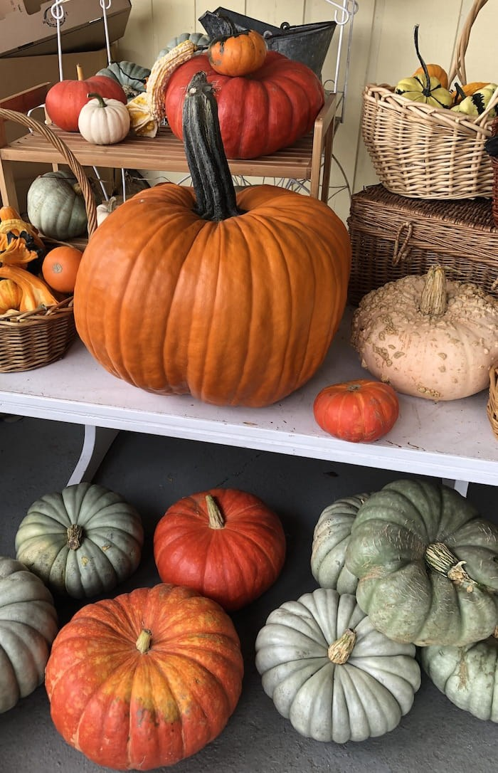 Dig into the strange and curious history of pumpkins. Photo by Lindsay William-Ross/Vancouver Is Awesome