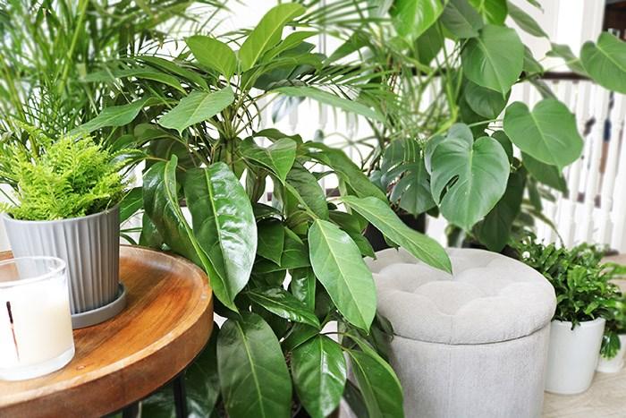 Photo: GardenWorks