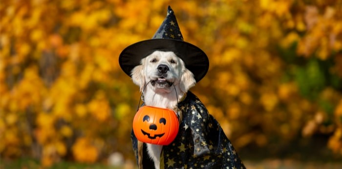 There's a Howwwl-a-ween costume party for dogs happening in Metro Vancouver. Photo: Shutterstock