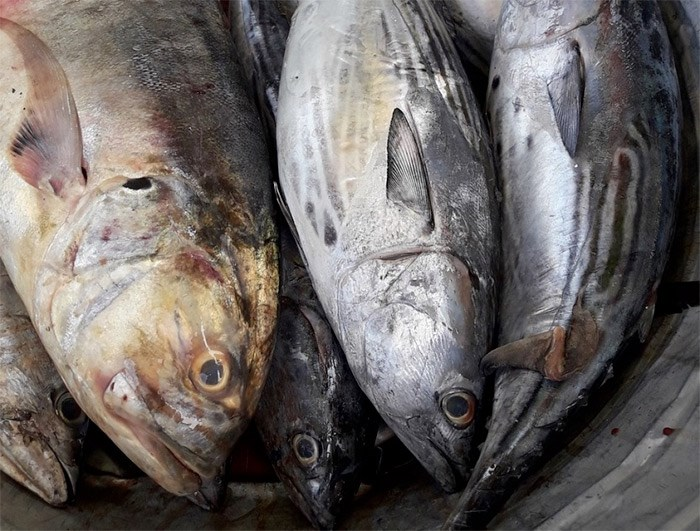 Richmond-based Seven Seas Fish Company, also known as 7 Seas, pleaded guilty Friday to importing putrid fish into the U.S.