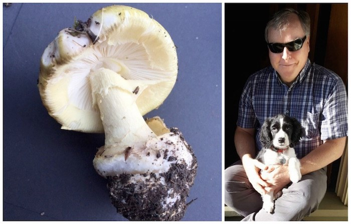 Left: Amanita phalloides, more commonly known as death-cap mushroom. Photo courtesy Island Health. Right: Peter Ronald and his puppy, Luna. Photo submitted
