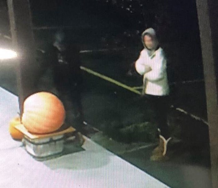 Surveillance video footage of the pumpkin theft. Photo: Parmjeet Dhaliwal / Oliver Loop