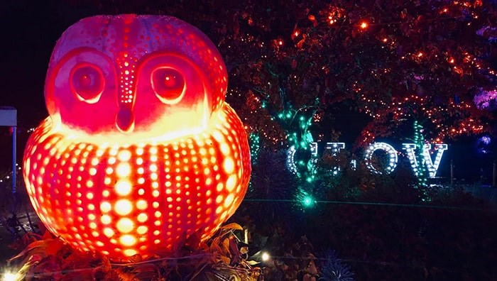 An owl pumpkin carving by Bruce Waugh at this year's VanDusen Glow in the Garden. Photo: Lindsay William-Ross