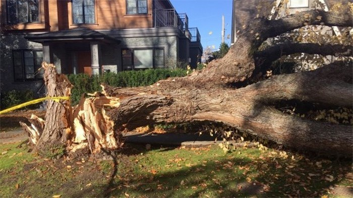 A tree trapped a Vancouver woman during Friday's windstorm. Photo: CTV News