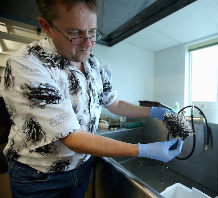 Gavin Hanke, curator of Vertebrate Zoology, shows off a spotted porcupine puffer fish in his lab in the Fannin Tower at the Royal B.C. Museum. Photo by Adrian Lam/Times Colonist