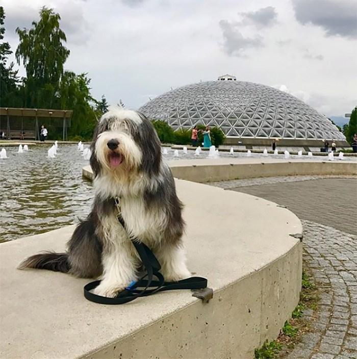 Riley at Queen Elizabeth Park. Photo @rileyyvr