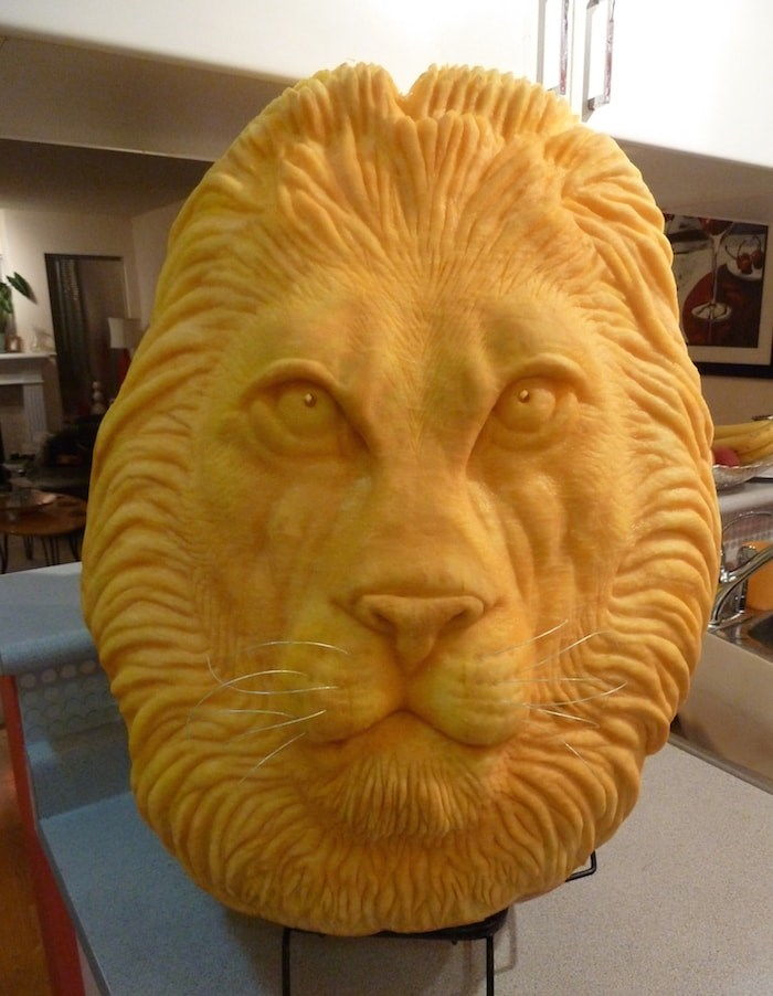 An adult lion pumpkin carving. Photo courtesy Clive Cooper