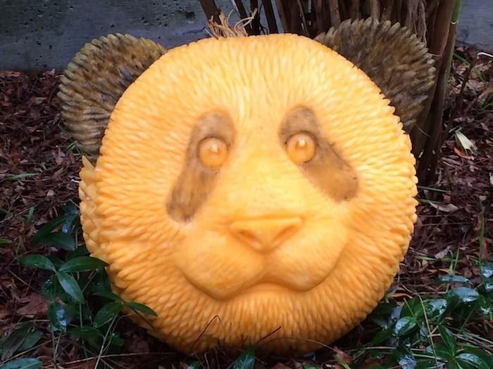 A panda pumpkin. Photo courtesy Clive Cooper