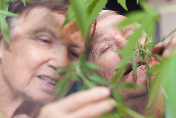Survey results show cannabis consumption among Canadian seniors has been accelerating at a much faster pace than it has among other age groups. Photo: Shutterstock
