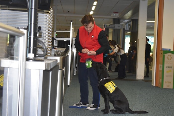 A puppy asks for treats from handler after navigating through the airport security. Photo by Nono Shen/Richmond News