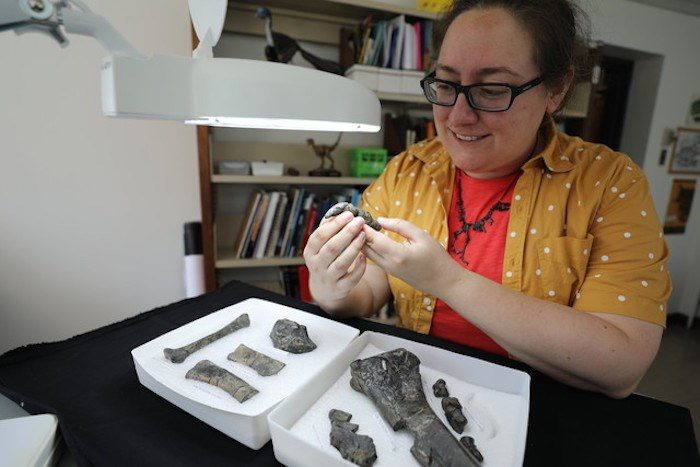 Dr. Arbour with the Royal BC Museum's paleontology collections. Photo courtesy Royal BC Museum
